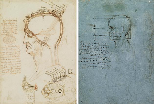 Estudo das proporções do rosto por Leonardo da Vinci, cerca de 1505