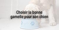 Choisir la bonne gamelle pour son chien