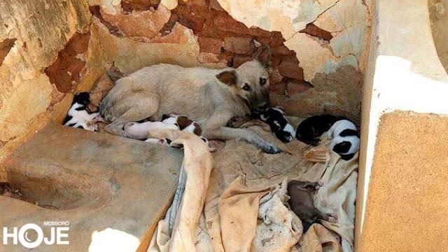 Cadela que teve dono assassinado no Alto Oeste tem 7 filhotes e está sem lar