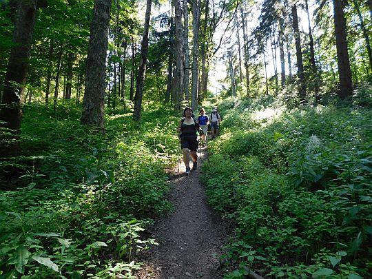 Ścieżka przez chwilę schodzi po stromym zboczu z Koziej Hali.