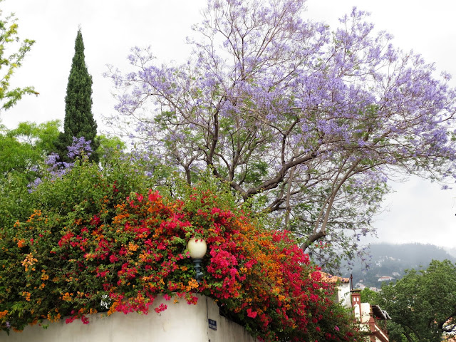 rainbow flowers in a Funchal corner