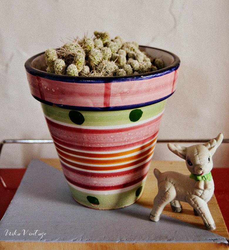Los cactus son unas plantas maravillosas y muy decorativas, por eso, hoy veremos 8 cactus preciosos que debes tener en tu casa