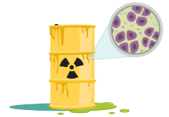 Конан-бактерия