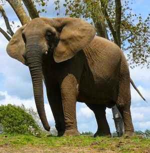 Qué Significa Soñar Con Elefantes Significados E Interpretaciones