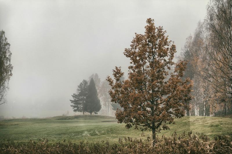 syksy, sumu, fog, usva, Finland, Suomi, Finlandphotolovers, outdoors, nature, luonto, luontovalokuva, luontovalokuvaus, Visualaddict, valokuvaaja, Frida Steiner, natural, trees, organic, field, puu