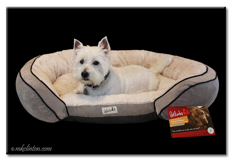Westie in large Petlinks bed