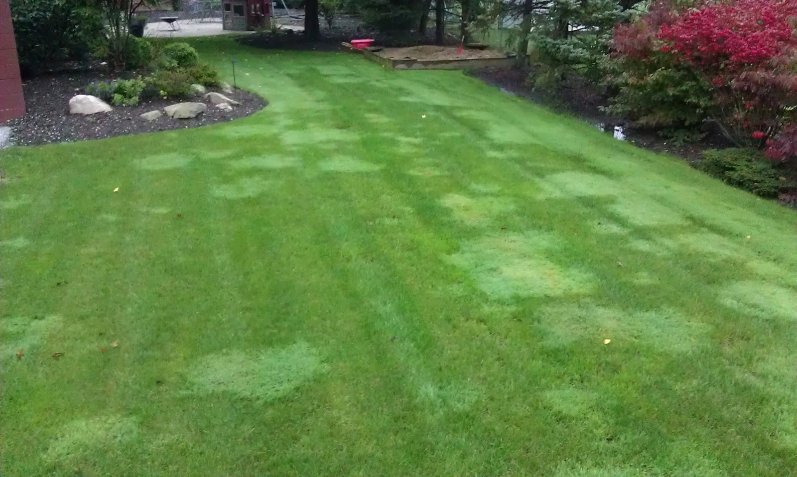 Lawn Lad Landscaper Controlling And Eliminating Creeping