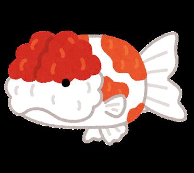 桜錦のイラスト(金魚)