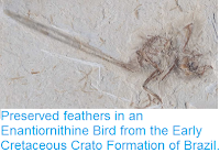 http://sciencythoughts.blogspot.co.uk/2015/06/preserved-feathers-in-enantiornithine.html
