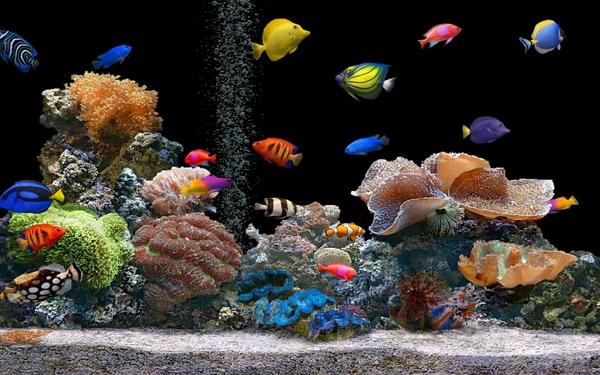 Gambar Foto Jenis Macam Nama Ikan Hias Air Laut Freewaremini