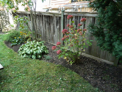 Riverdale backyard fall cleanup after by Paul Jung Gardening Services Toronto