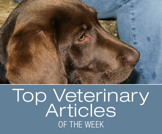 Top Veterinary Articles of the Week: Veterinary House Calls, Teeth Brushing, and more ...