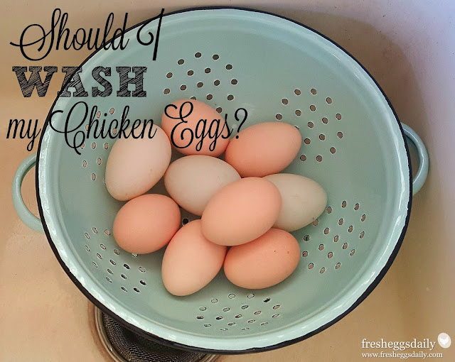 Should I Wash my Chicken Eggs? | Fresh Eggs Daily®