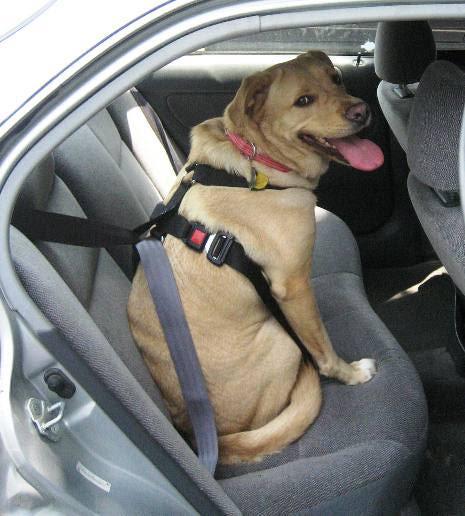 Dog Seat Belt Harness >> Belt Zara Images