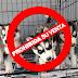 Piden que se PROHÍBA la venta y compra de cachorros en todo México. ¿Que Opinas?