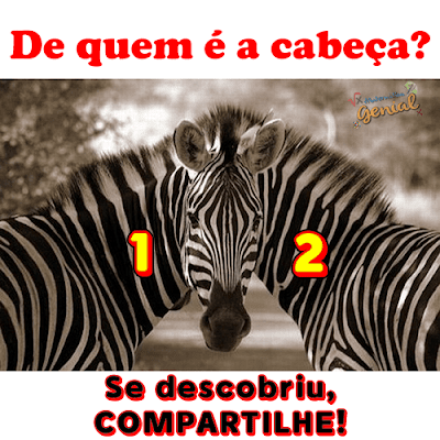 Descubra: De qual zebra é a cabeça?