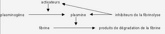 fibrinolyse schéma infirmier hémostase