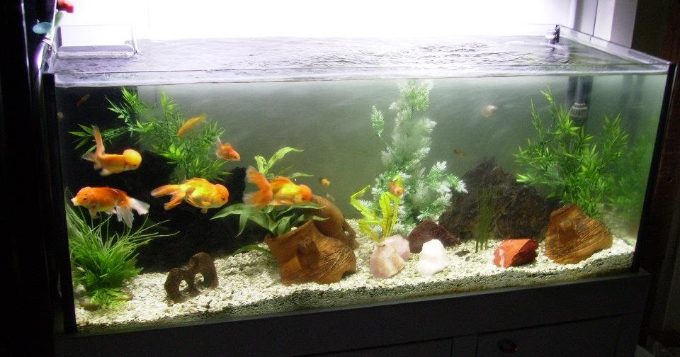 Pirana aquarium il primo acquario for Acquario shop online
