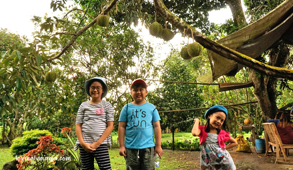 MARADULA - JKN Fruit Farms - Talisay City -fruit orchard - lanzones - rambutan - durian- marang - eat all you can lanzones - eat all you can rambutan- Negros Occidental - family travel - Bacolod blogger - Bacolod mommy blogger - Bacolod City - father and daughter - farm visit - field trip