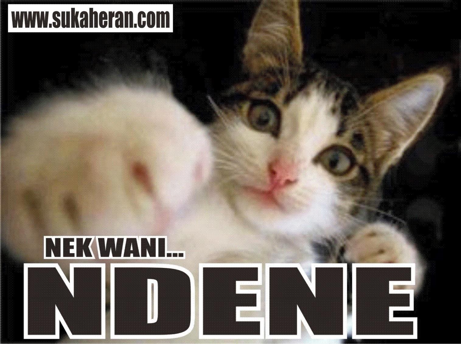 Unduh 61+  Gambar Kucing Lucu Tulisan Imut Gratis
