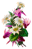 flower botanical artwork shabby image printable clipart floral