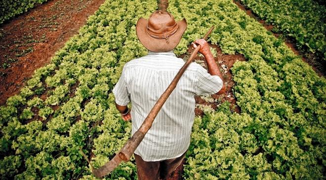 Mais de sete mil agricultores familiares são beneficiados com entregas de selo