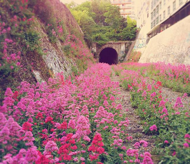 محطة قطارات مهجورة منذ زمن، حلت مكانها هذه الأزهار المذهلة – في باريس