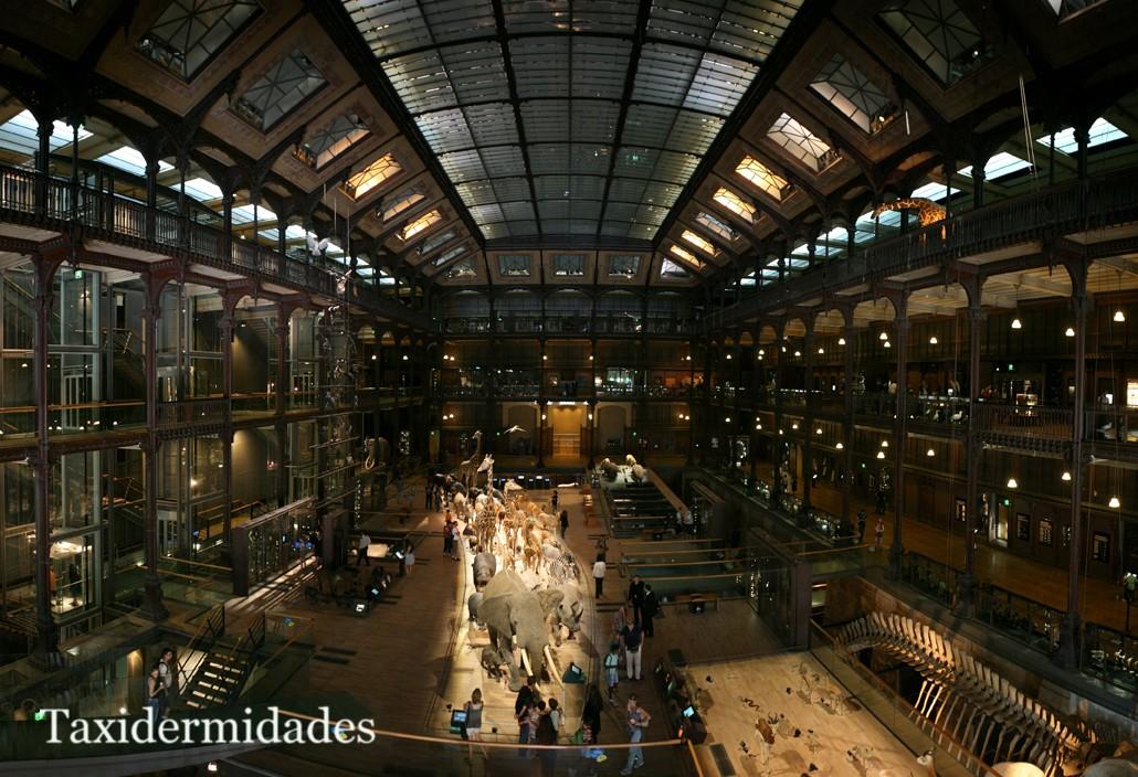 El Museo Nacional de Historia Natural de París. | Taxidermidades