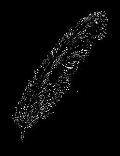 feather illustration image