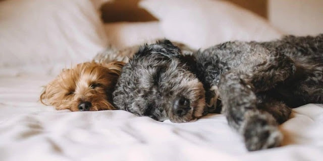 Hospedagem em uma viagem com cachorro para Miami