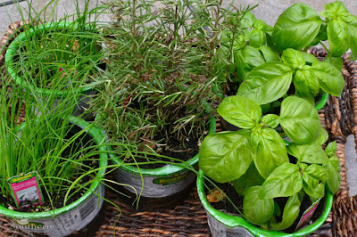 how to grow your own herbs | A Southern Soul