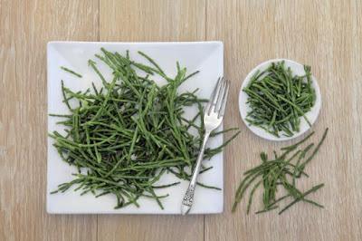 Planta Salicornia