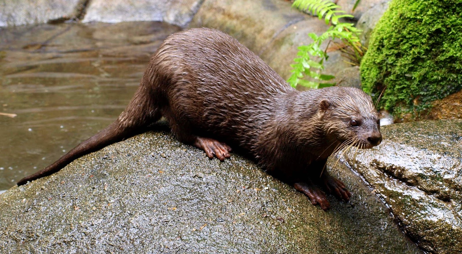 Pet Otter Australia Twinning Around Australia May 19 Australia Zoo With Comments By