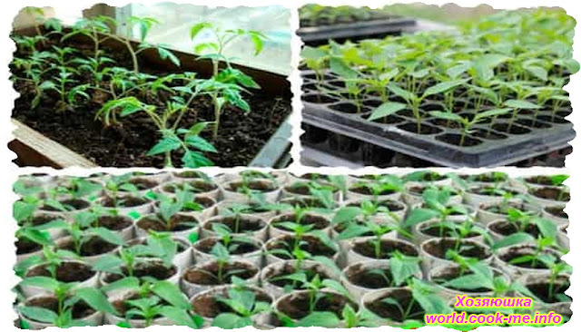 Советы по  выращиванию рассады овощей