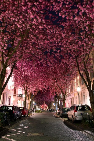 Bunga Paling Indah Sedunia : bunga, paling, indah, sedunia, Terowongan, Pohon, Paling, Indah, Dunia, @dibacain