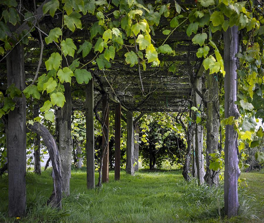 Grape Arbor Pergola Plans Pdf Woodworking