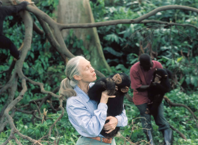 Jane Goodall holds an orphaned chimpanzee. Science Museum of Minnesota