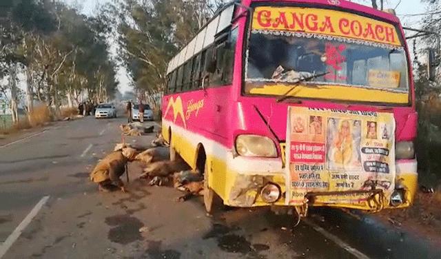 तेज रफ्तार बस ने बरपाया कहर, कुचल डाले बेजुबान, 22 भेड़ों की मौत और 25 घायल