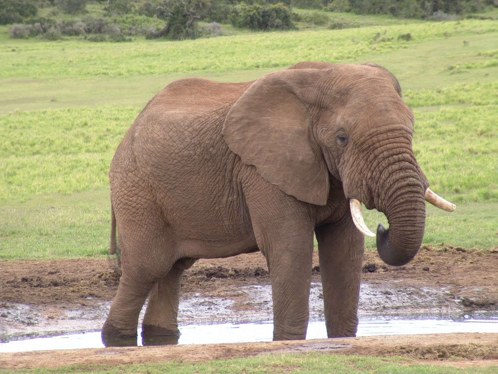 Hd Wallpapers Fine Different Types Elephant High