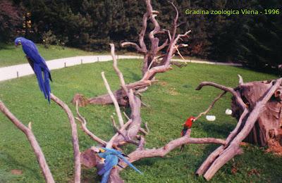 Papagali la gradina zoologica din Viena