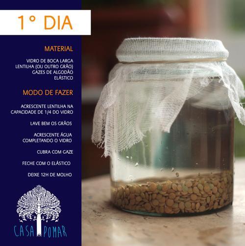 como germinar lentilhas