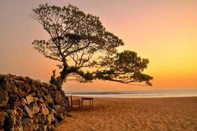 pohon duras pantai pok tunggal