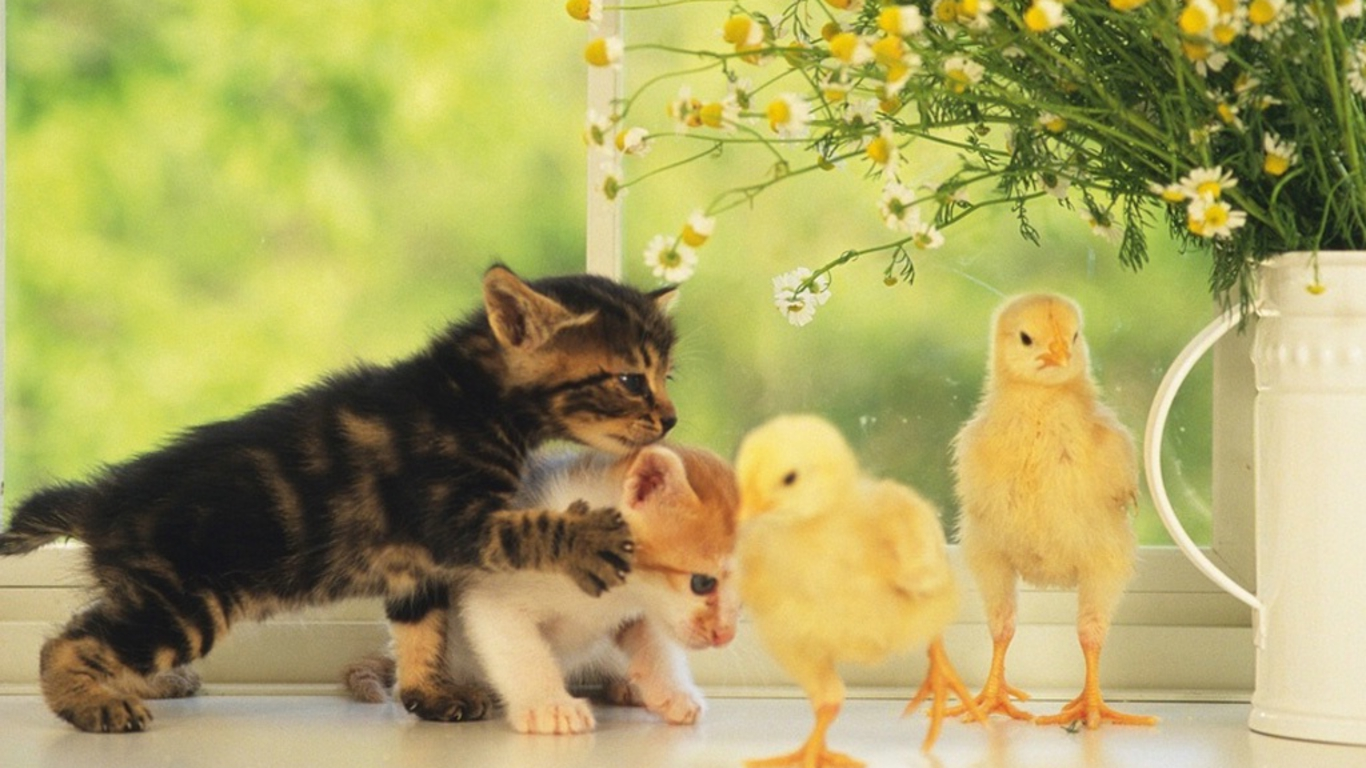 Cute baby cats cool stories and photos - Baby kitten backgrounds ...