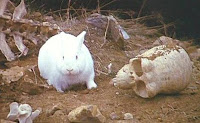 Rabbit of Caerbannog. Death awaits you with pointy teeth