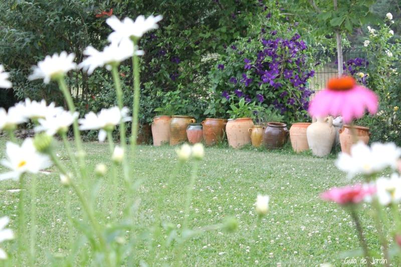 C mo cuidar las tillandsias clavel del aire guia de jardin for Como cuidar el pasto de mi jardin