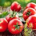 Kenali Manfaat Dan Khasiat Buah Tomat Yuuuk...!
