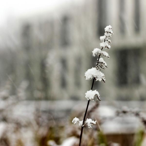 Winter in der Stadt, schneebedeckter Zweig