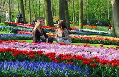 цветы-голландии