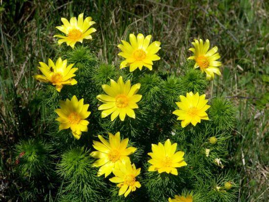 Piante e fiori piante perenni che fioriscono in primavera for Piante e fiori