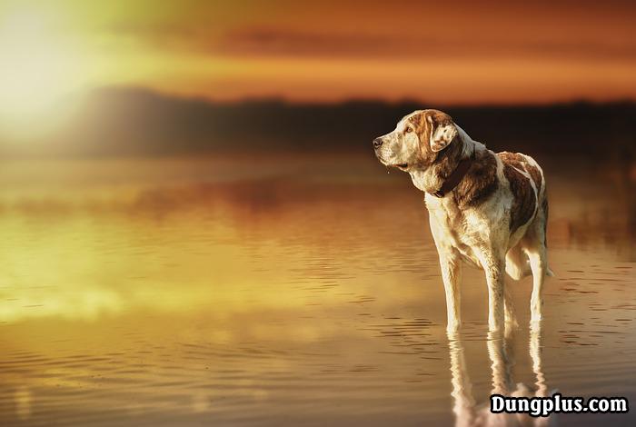 Chú chó đứng trên mặt hồ